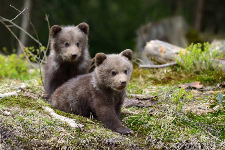 Nature Trips Wildlife Watching -  Hiking Adventure in Slovenia