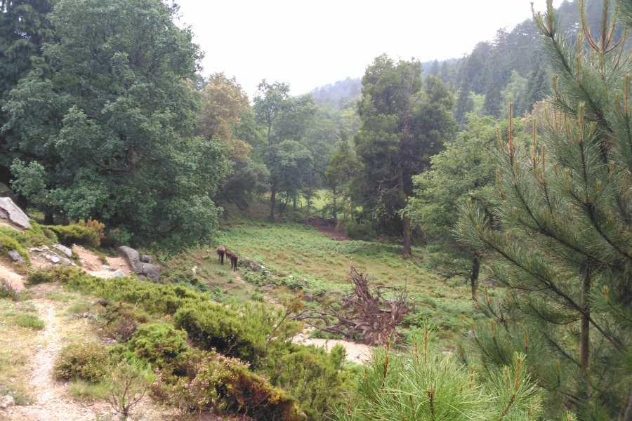 Gerês Holidays Tour: Wasserfälle, 4 Stunden