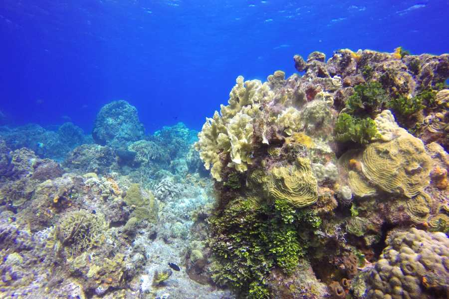 Cancun Vacation Experts SNORKEL TOUR IN COZUMEL