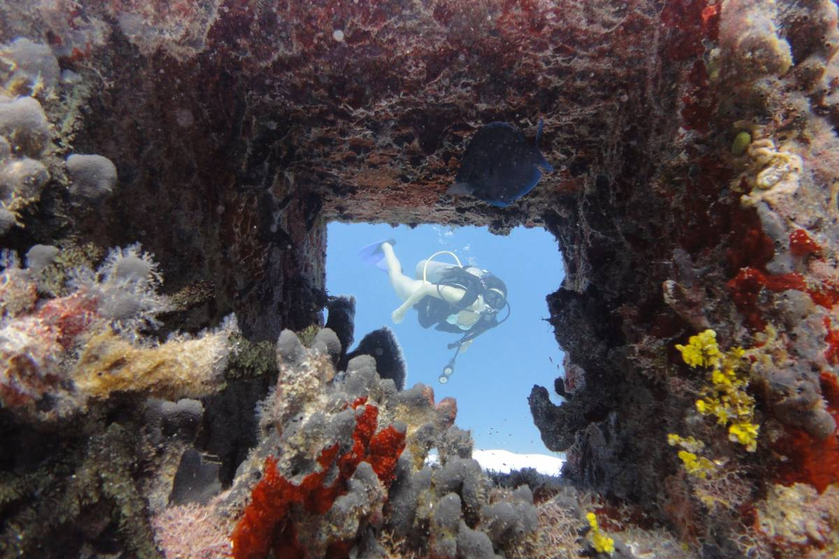 Cancun Vacation Experts TWO TANK DIVE IN COZUMEL FROM PLAYA DEL CARMEN