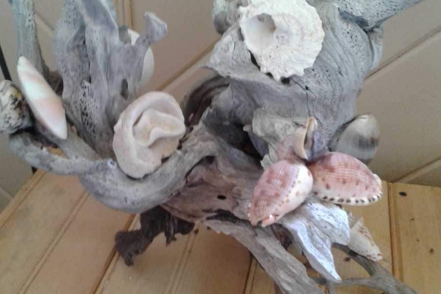 TheRealBahamas LLC Seashell Craft Workshop: 1 Hr: Alan Dixon