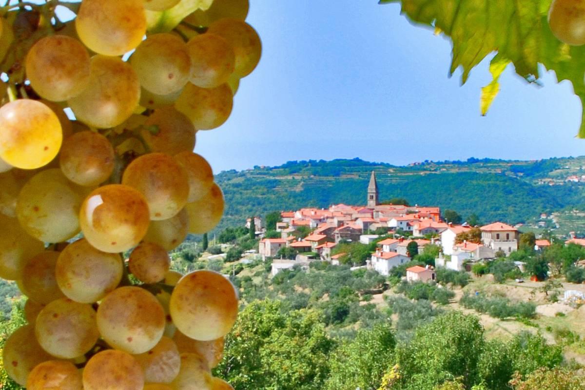 Kompas d.d. Goriška Brda wine region & wine tasting