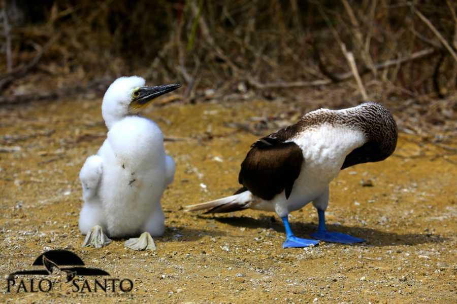 PALO SANTO TRAVEL MANTA | ISLA DE LA PLATA | ECUADOR