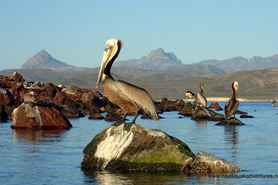 Baja Kayak Adventure Tours Ltd. Coastal Route - 7 Day Kayak Expedition