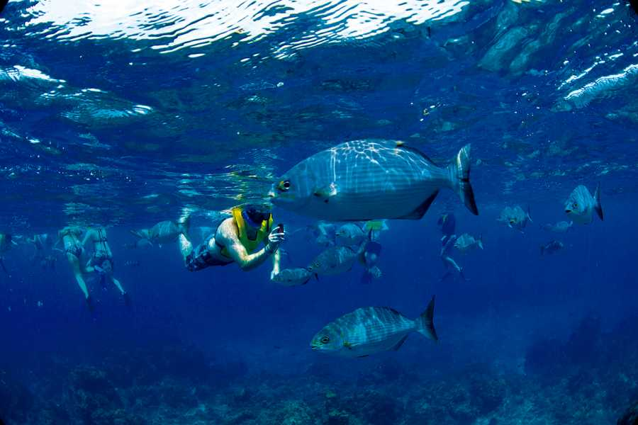 Backpackers 8. Playa Azul + Snorkel - Rosario Islands