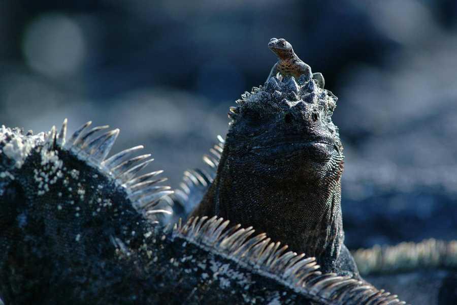 Gray Line Ecuador Mini Galapagos