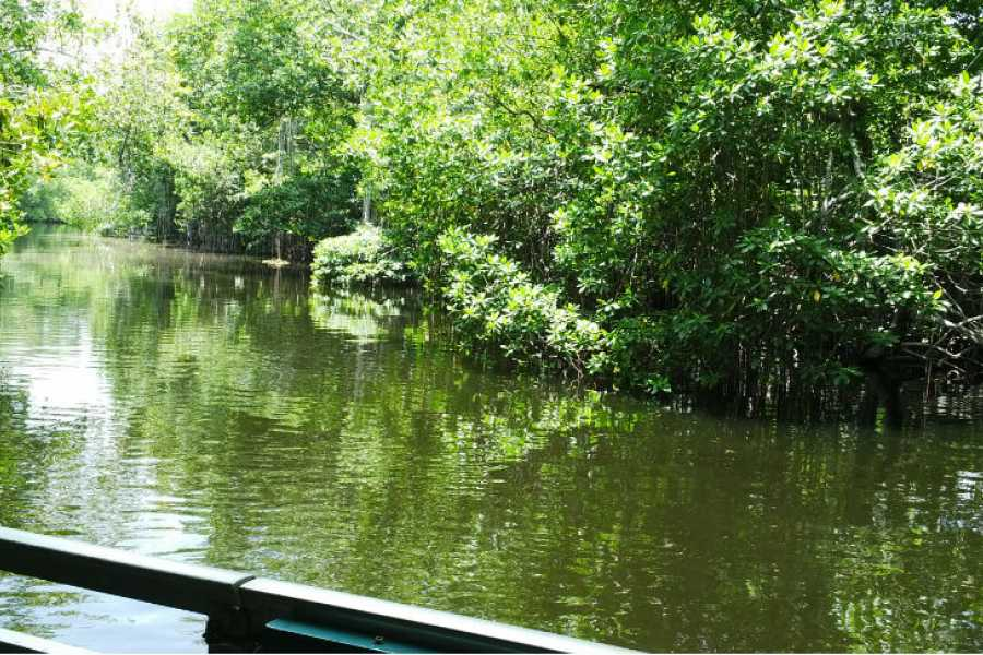 Route 876 Tours Black River Safari and YS Falls Day Excursions from Montego Bay