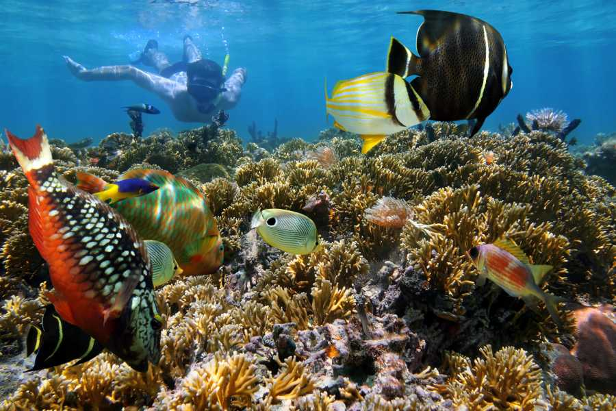 Krain Concierges Las Catalinas Islands Snorkeling Excursion