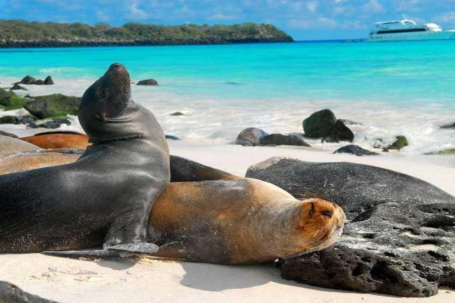 Gray Line Ecuador Galápagos Ideal