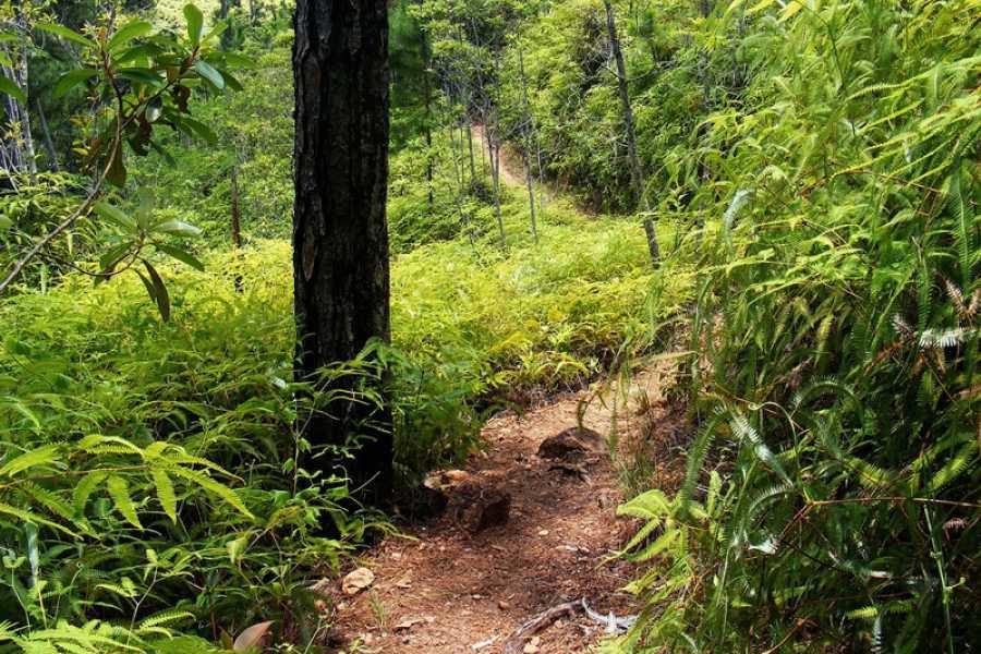 yourbelizeconcierge Rainforest Expedition
