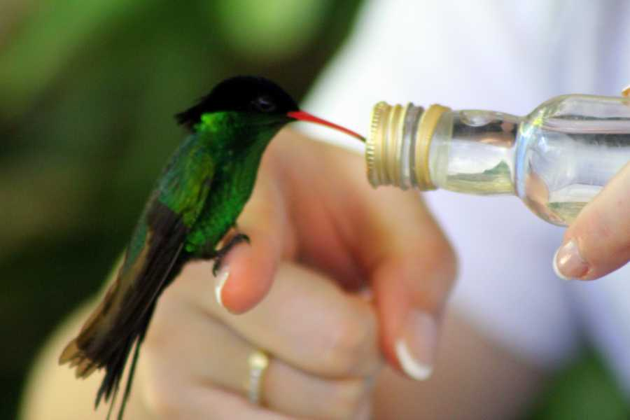Route 876 Tours Bird Feeding Sanctuary and Montego Bay Highlight Tour Combo from Montego Bay