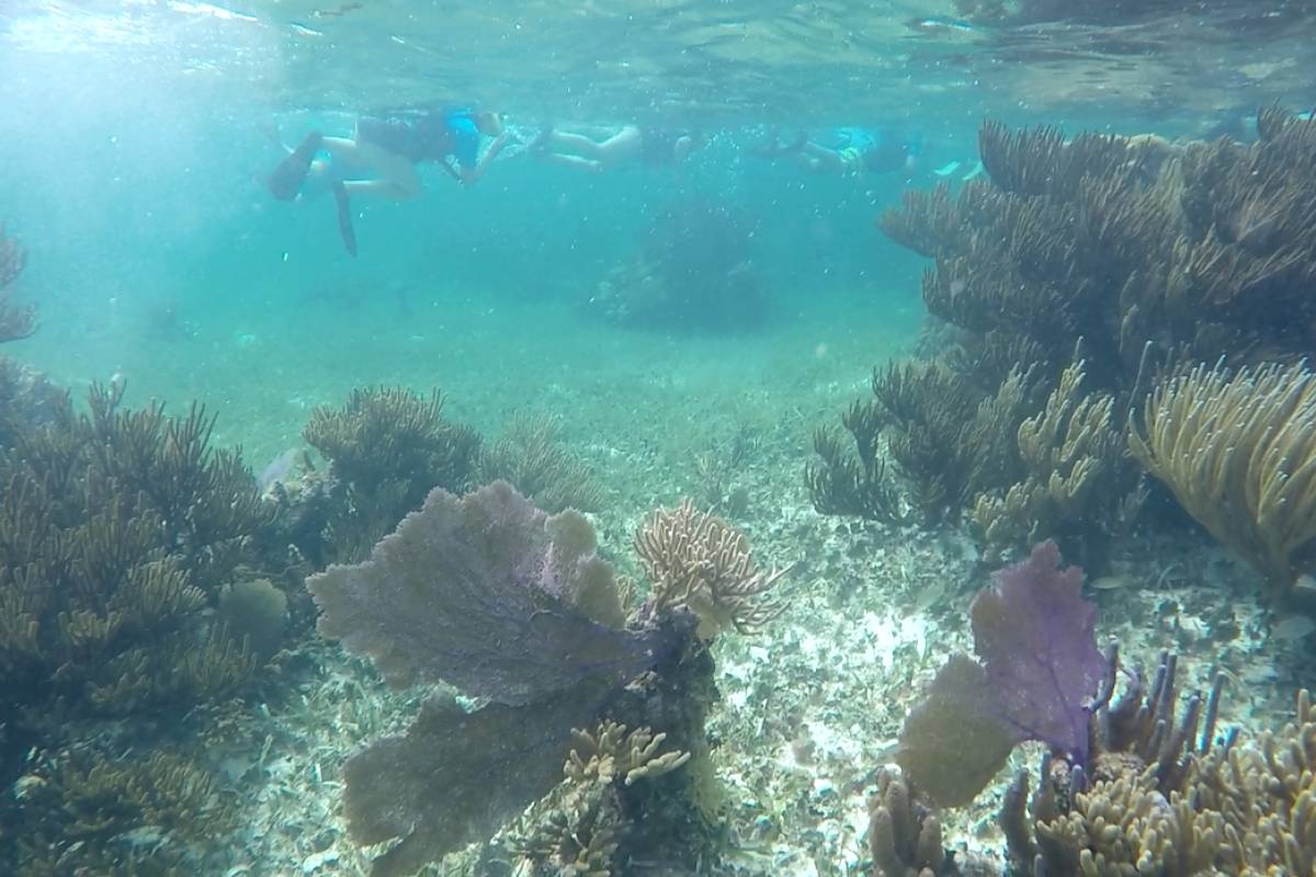 Cancun Vacation Experts SNORKEL PARADISE