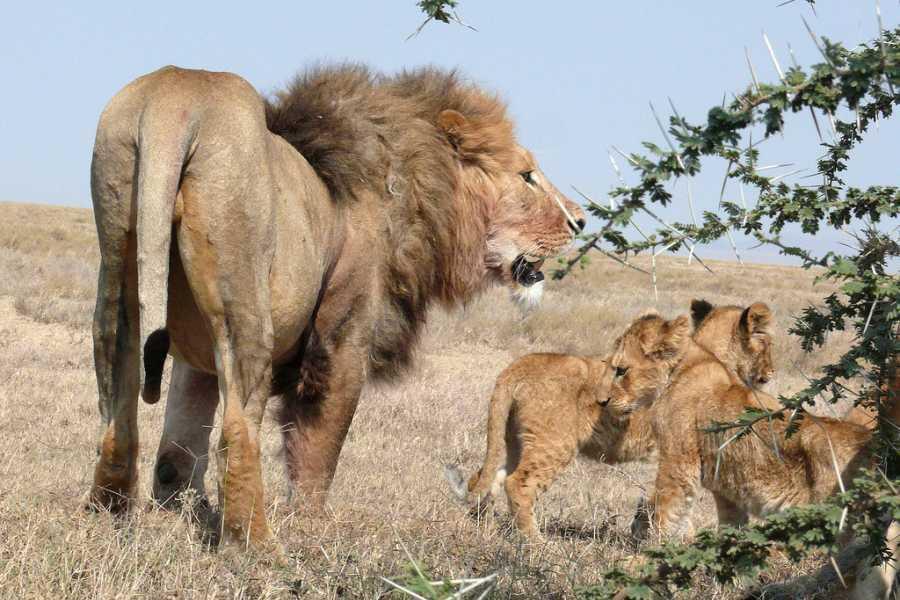 ECO-AFRICA CLIMBING 3 DAYS LAKE MANYARA& NGORONGORO CRATER CAMPING SAFARI