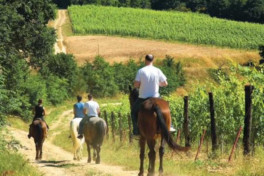 Tuscany on a Budget tours HORSEBACK RIDING IN TUSCANY