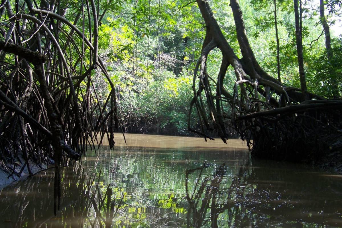 Tour Guanacaste Tamarindo Mangrove & Estuary Tour