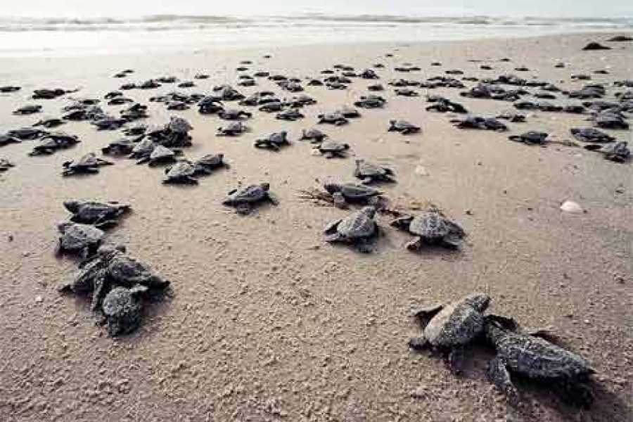Tour Guanacaste Turtle Night Adventure Tour
