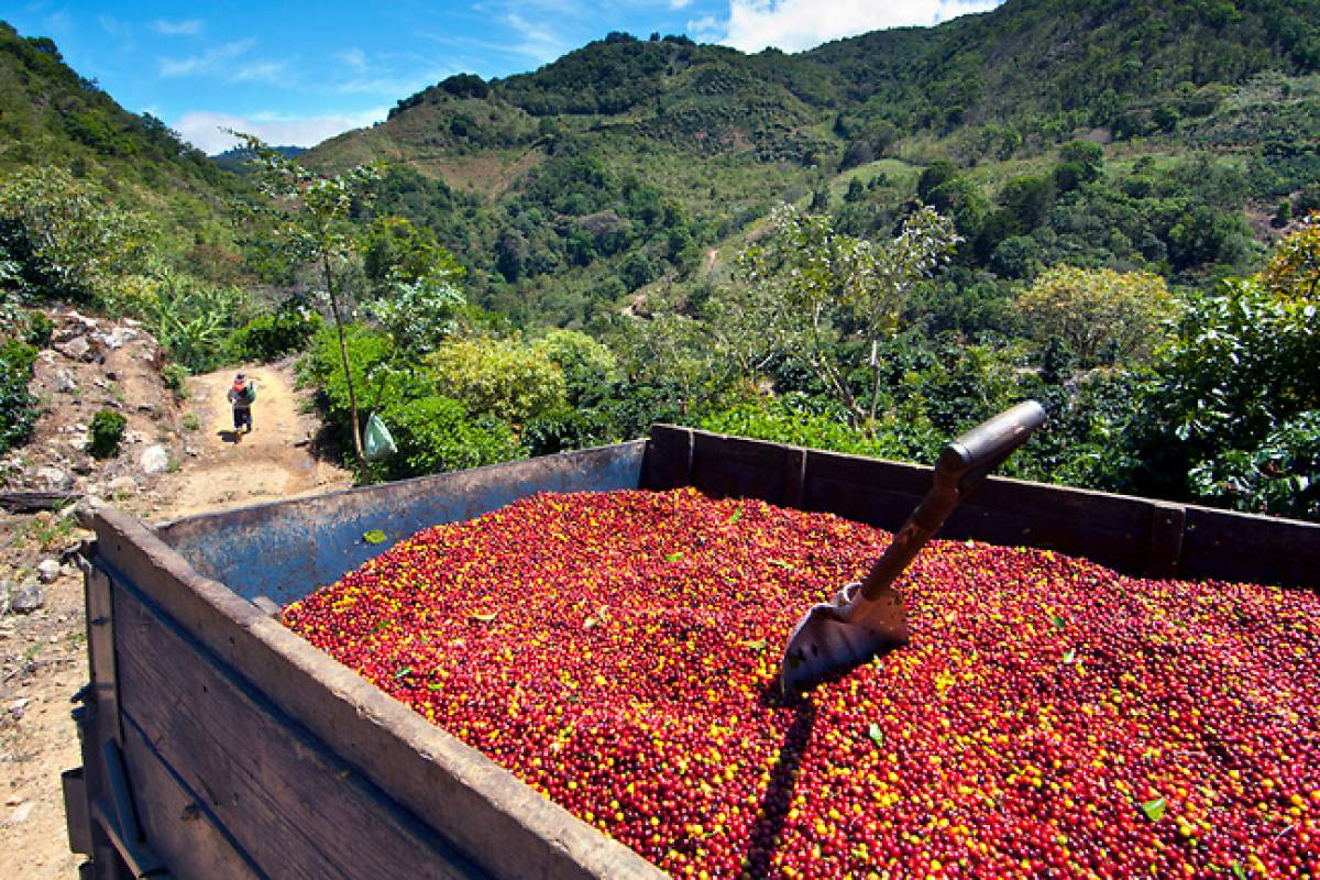 Tour Guanacaste Coffee Plantation and Macaw Tour