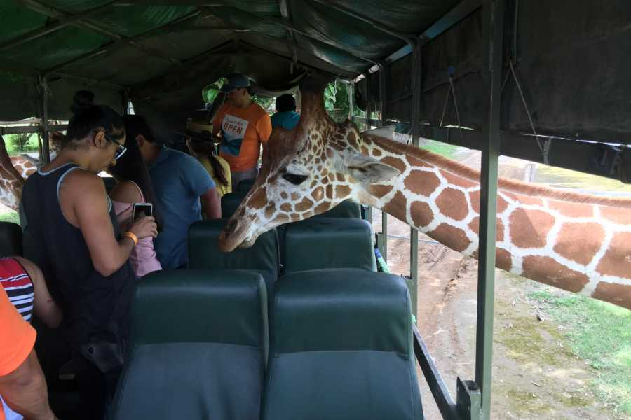 Tour Guanacaste Africa Safari Adventure Park