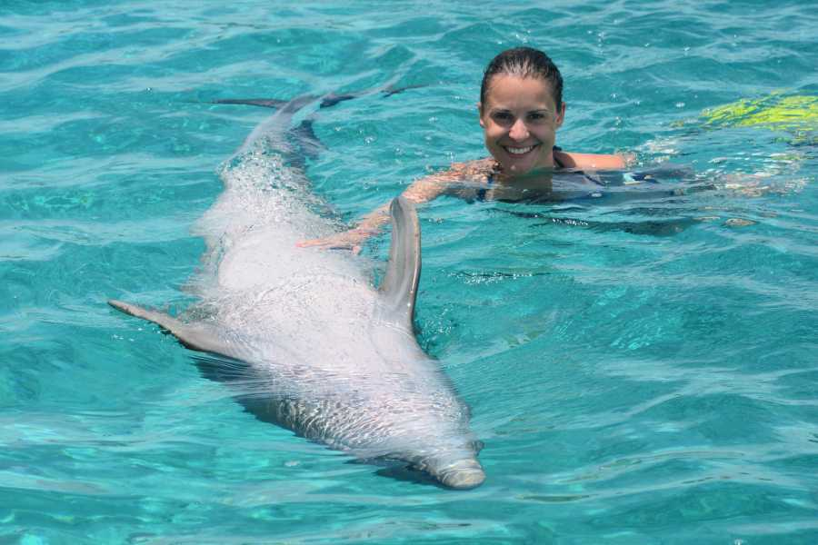 Blue Bay Dive & Watersports Dolphin Swim