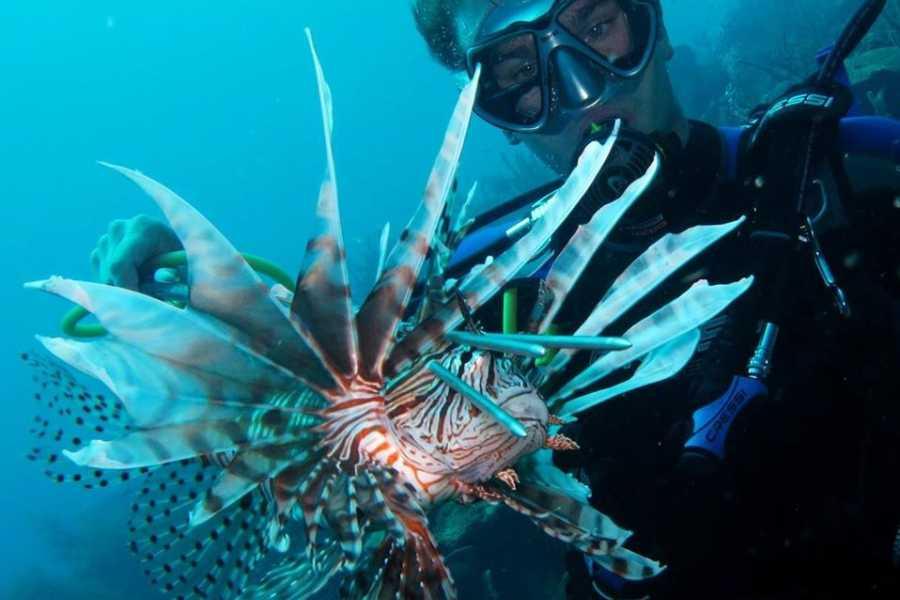 Blue Bay Dive & Watersports Feuerfische Jagd Erfahrung