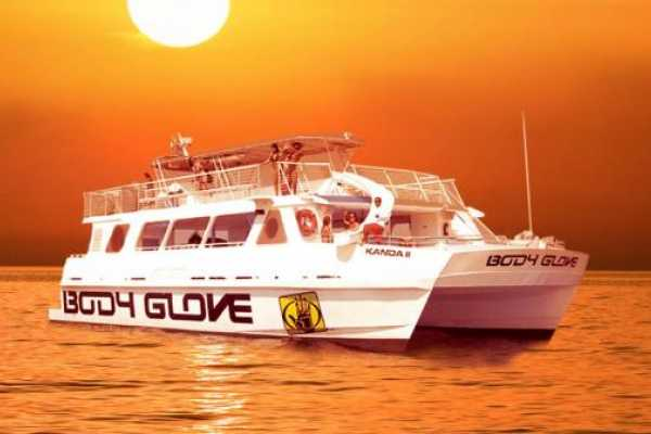 Dream Vacation Builders Hawaii Island-Body Glove Cruise:Snorkel & Dolphin Adventure Kona Big Island