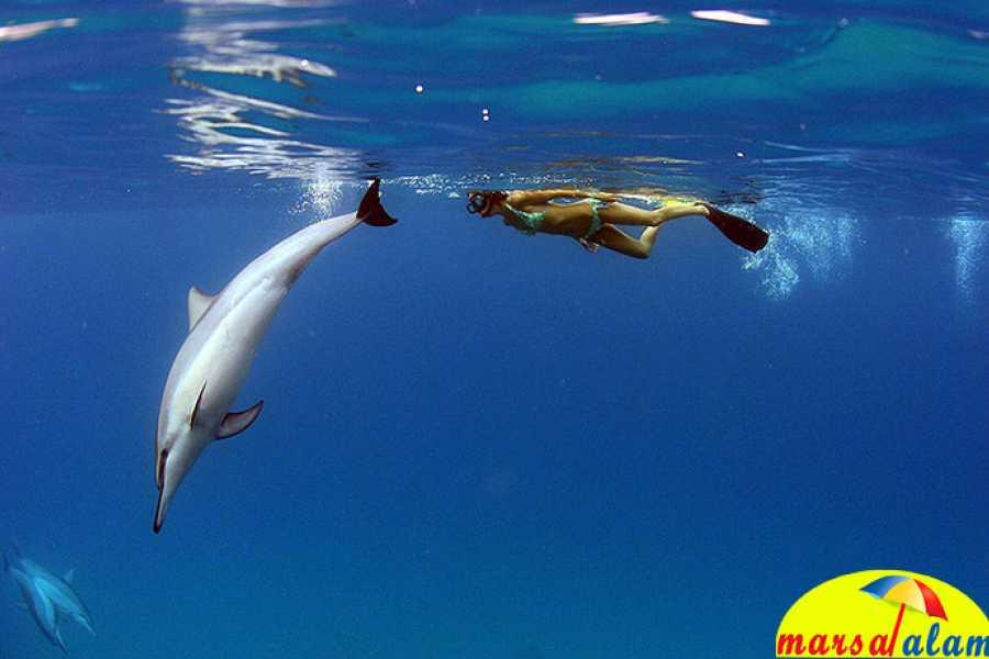 Marsa alam tours Schnorchel Trip Delfin Reef von Marsa Alam