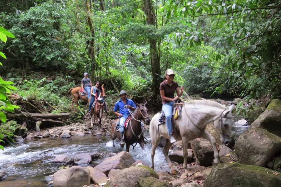 Congo Canopy Horseback Monkey Sanctuary Combo