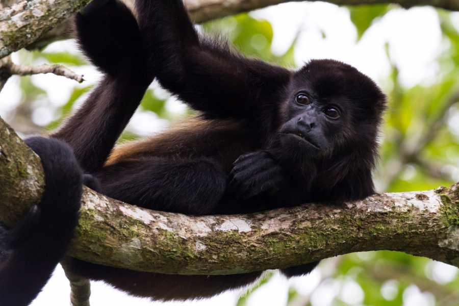 CongoCanopy.com Horseback Monkey Sanctuary Combo