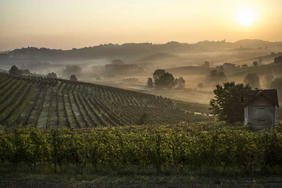 MilanoWow The Great Wine Tour From Milan - Discover and Taste Barolo and Spumante
