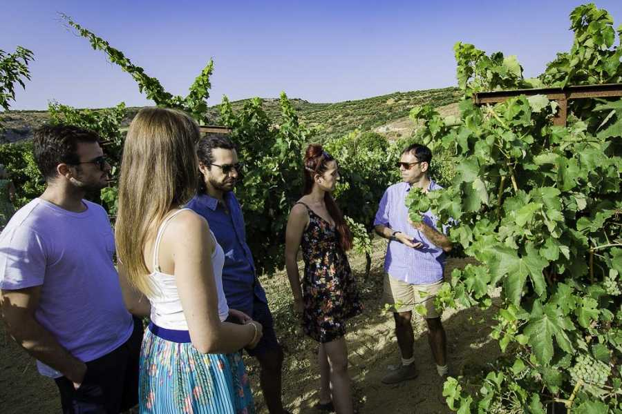 Vintage Routes Crete Group Tour Peza Wine Roads Tour