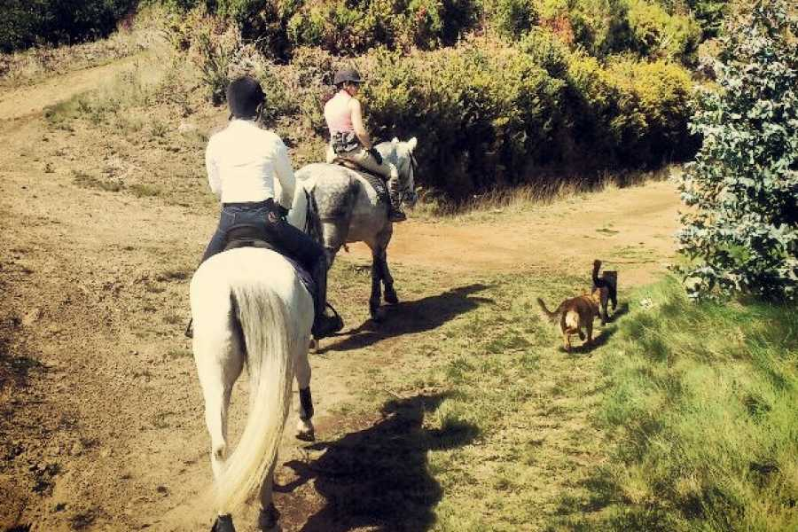 Nature Meetings Horse Riding in Madeira