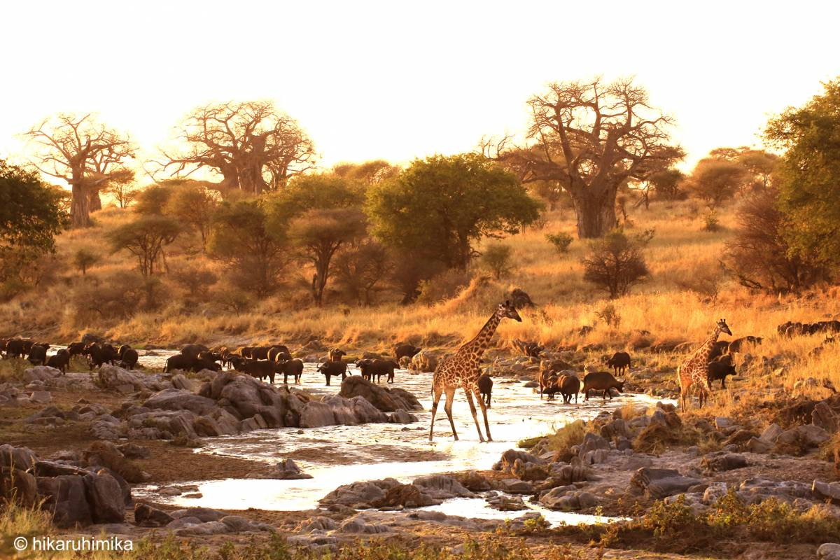 AnyActivities by H.I.S. Kenya & Tanzania Adventure