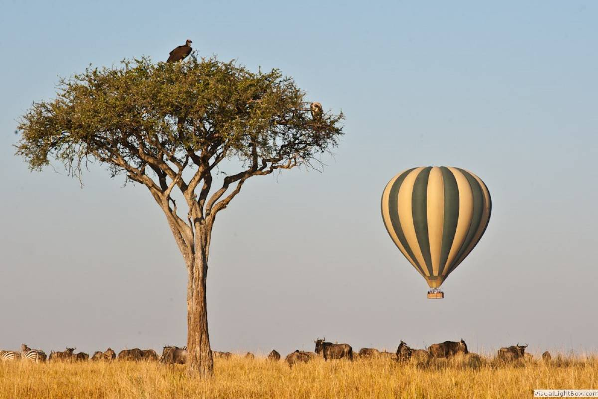 AnyActivities by H.I.S. Kenya & Tanzania Adventure and Hot Ballon