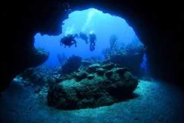 2 tank Boat Dive to Mushroom Forest, Blue Cave for Divers and Snorkelers