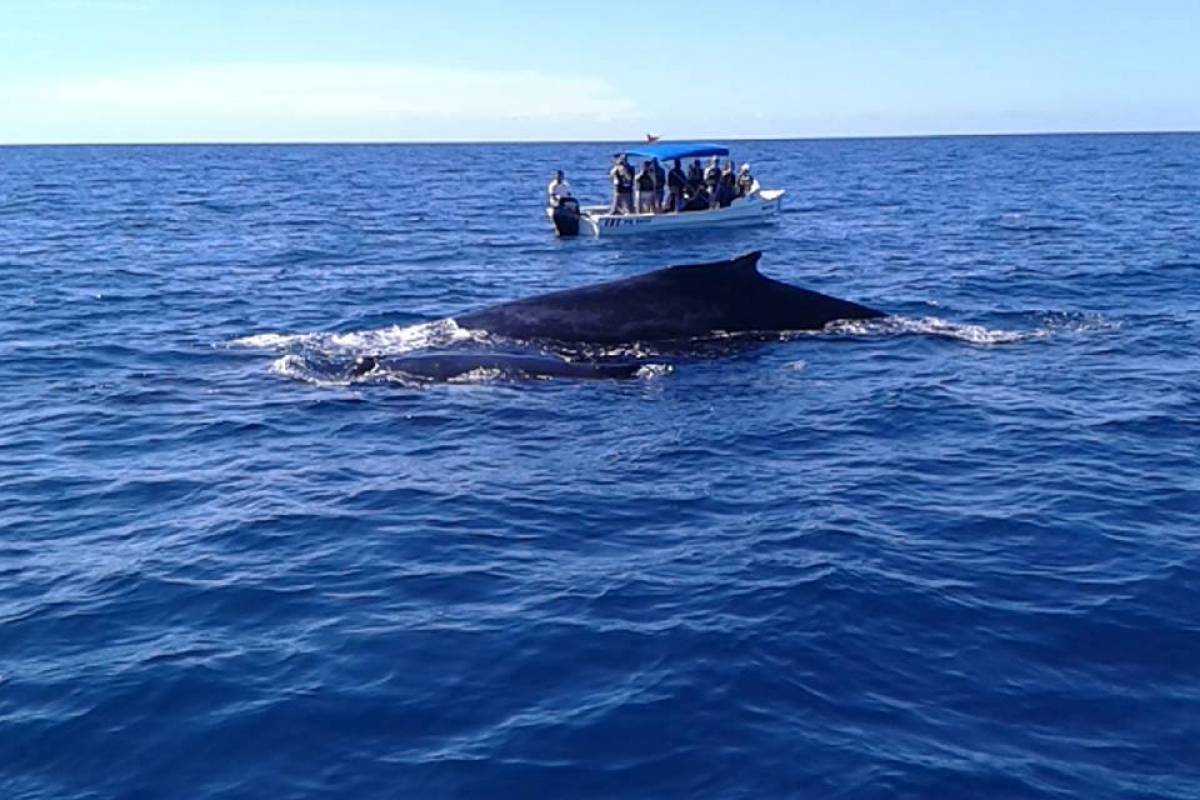 Uvita Information Center Whales and Dolphins Watching  Tour