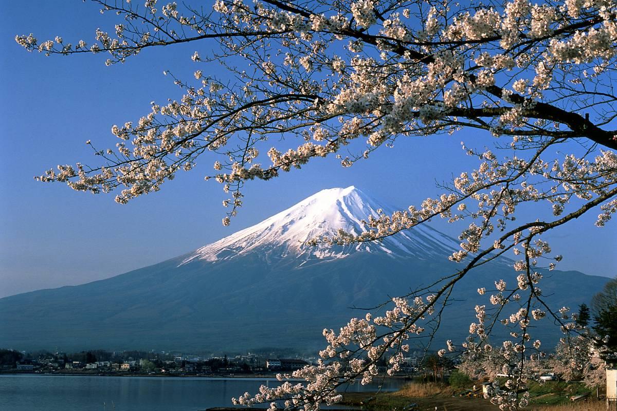 AnyActivities by H.I.S. 2018 Cherry Blossom Dreams 12 Days