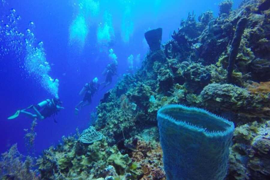 Marina Blue Haiti 10 Dive package