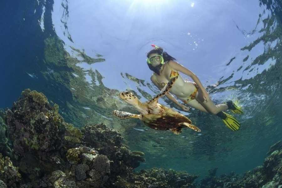 Marsa alam tours Snorkeling Trip At Port Ghalib Marina from Portghalib