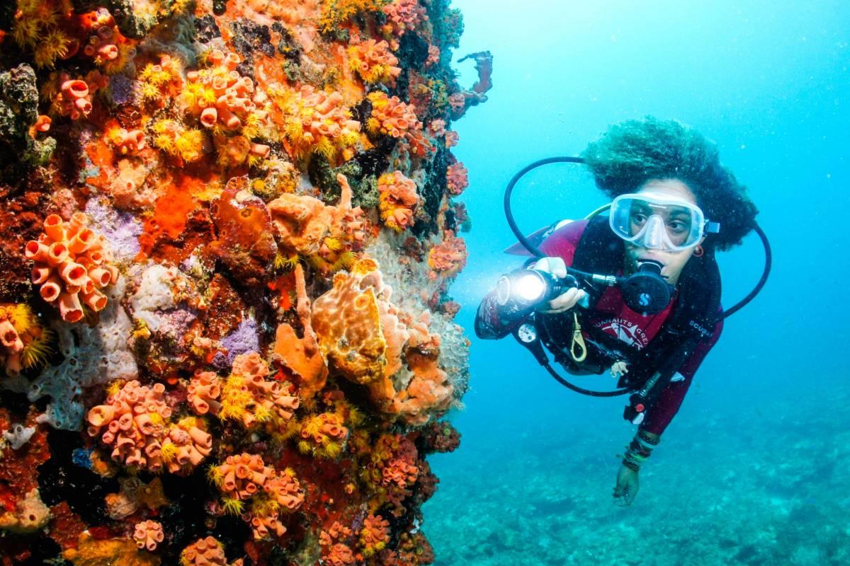 Aquanauts Grenada Arrive and Dive