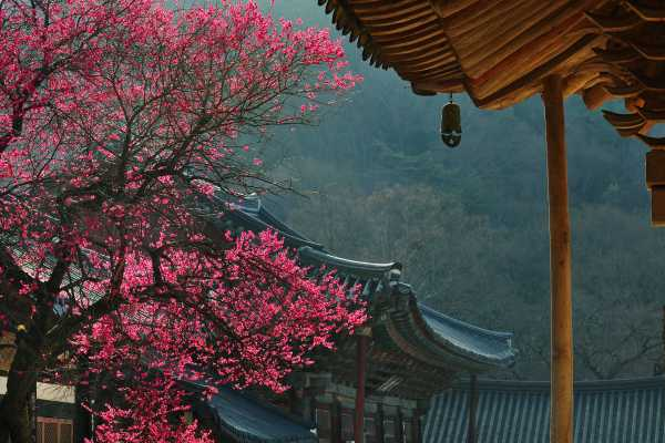Authentic Korea 3days (Private guided challenging tour)