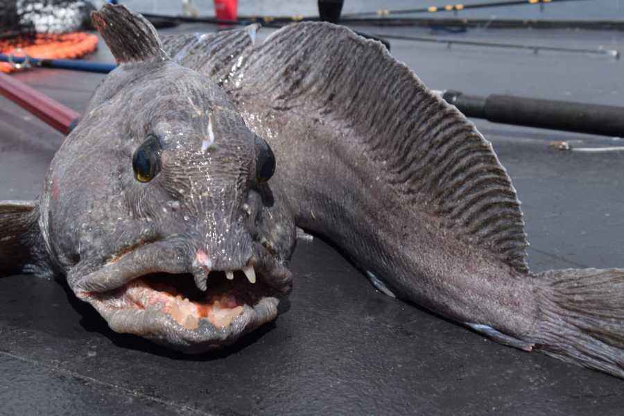 www.gosta.co Go Fishing Long Trip