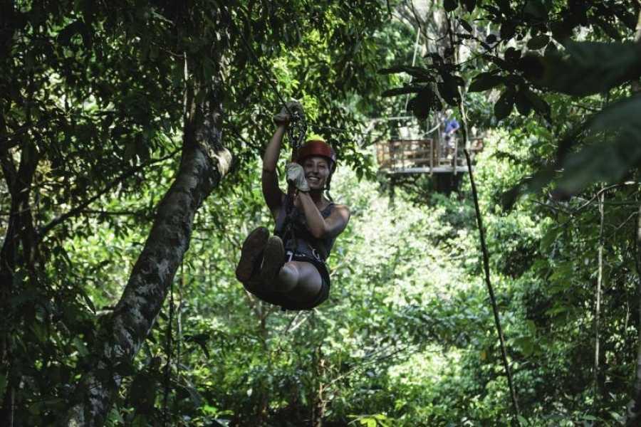 Uvita Information Center Flight of the Toucan