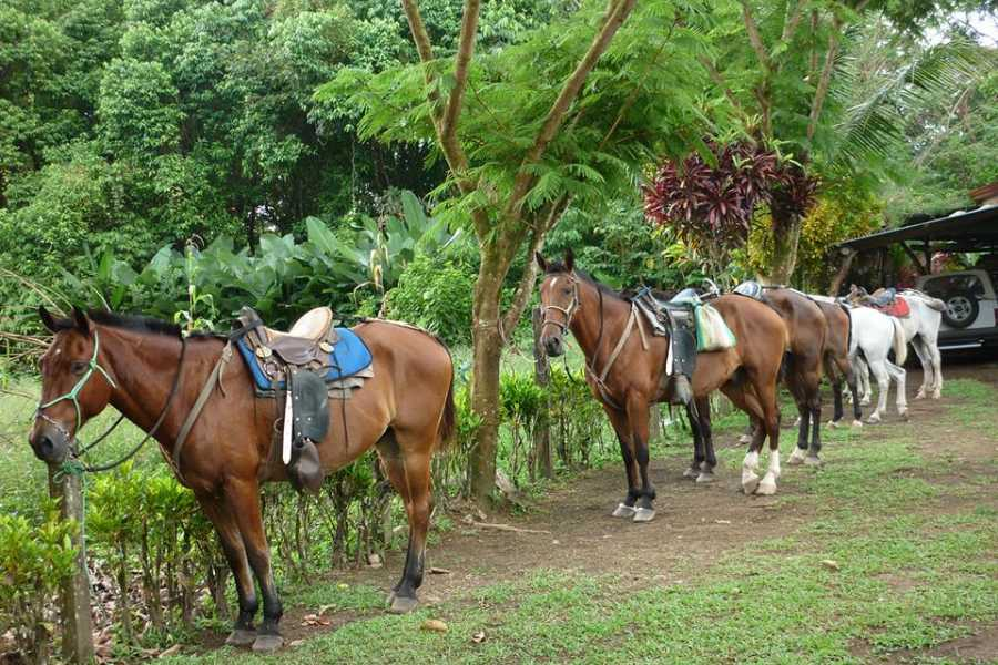 Uvita Information Center Tour a caballo con Lalo Tours