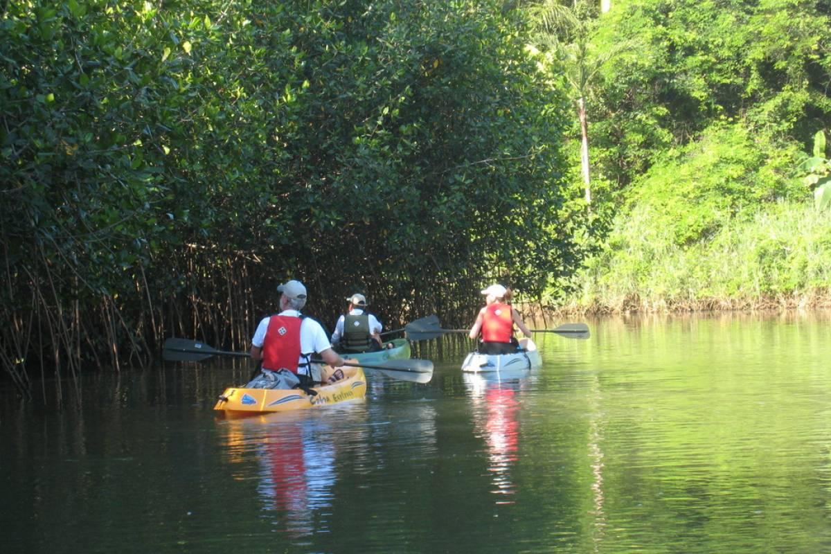 Uvita Information Center Mangrove Kayaking