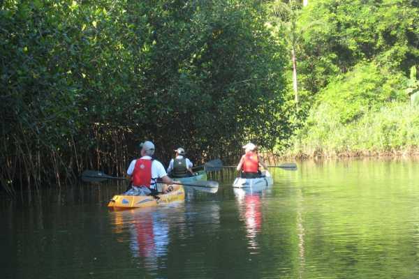 Uvita Information Center Mangrove Kayaking from Sierpe