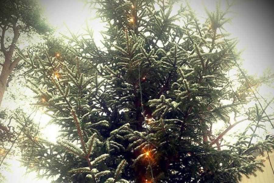 Ekebergparken Hakkespettene lager julestemning