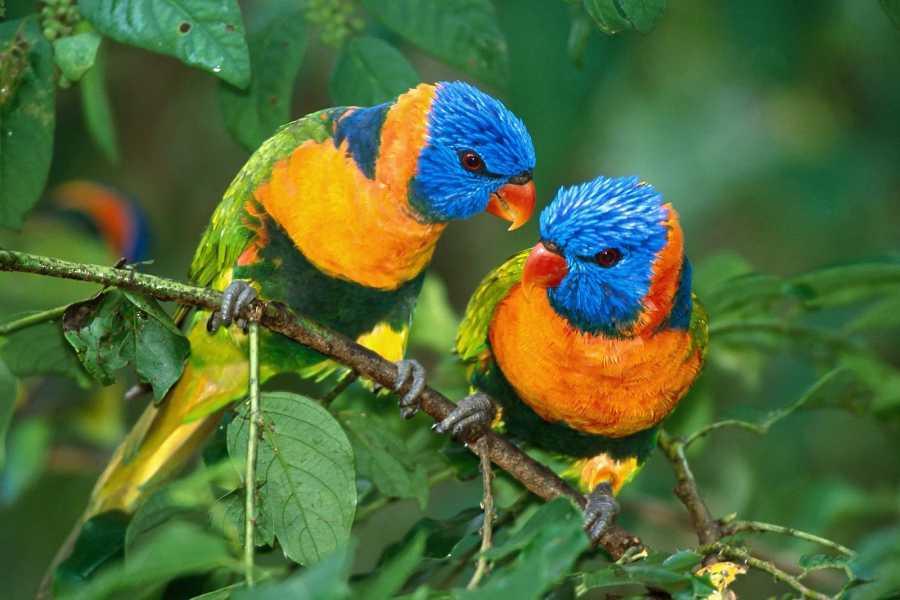 mystic lands peru BIRDWATCHING MANU 6D/5N