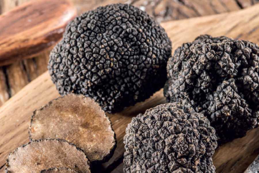 Murten Tourismus / Morat Tourisme Soirée de gala du marché aux truffes