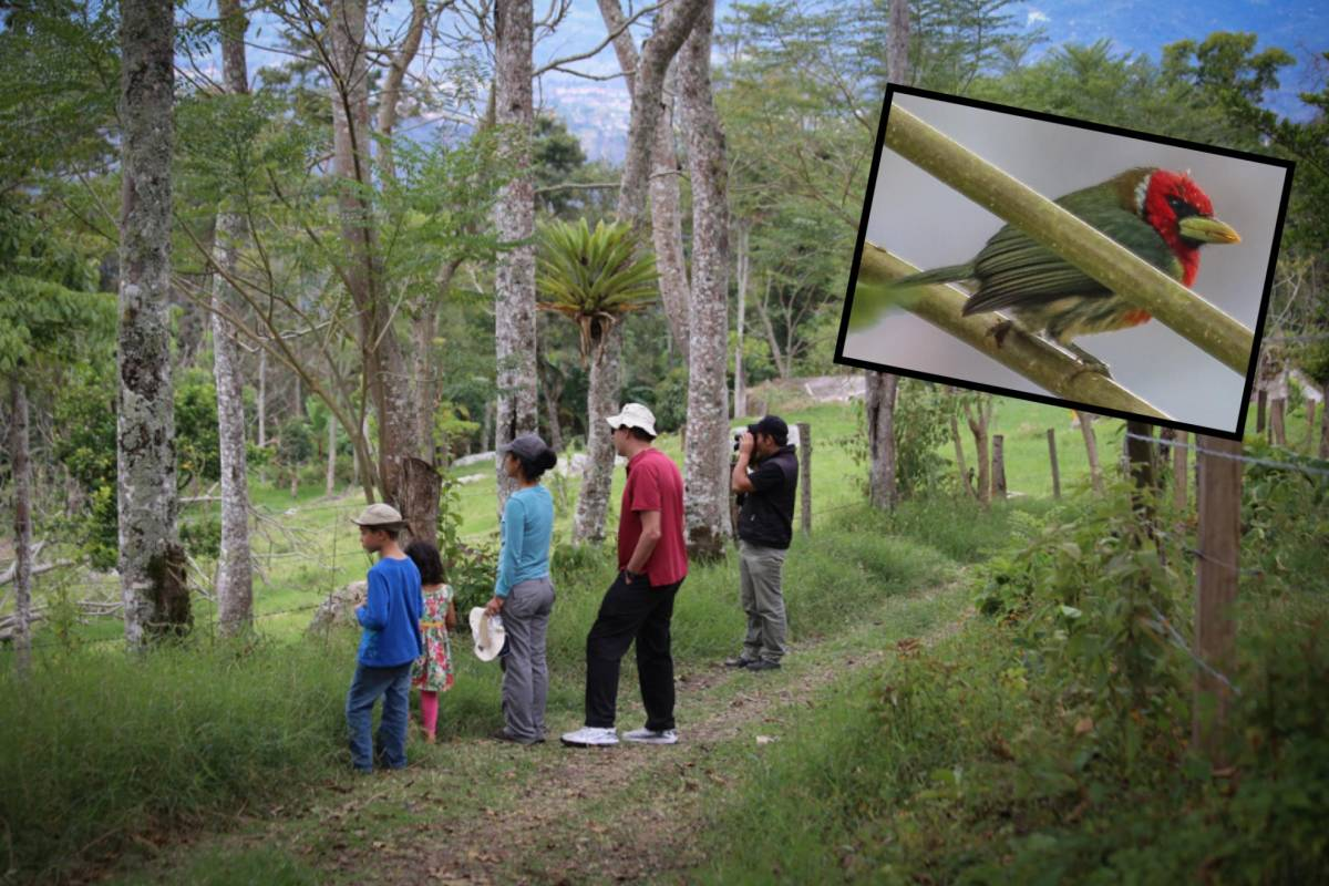 Andes Ecotours Quininí Forest Reserve