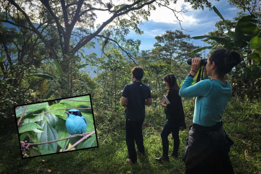 Andes Ecotours Quininí Forest Bird Reserve